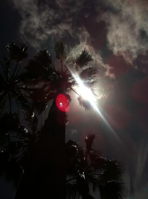 Tree sun clouds
